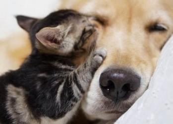 Трогательная историю удоверения кошки собакой