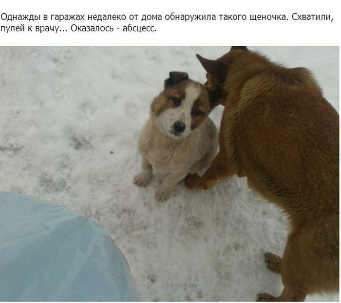 Спасение щенка