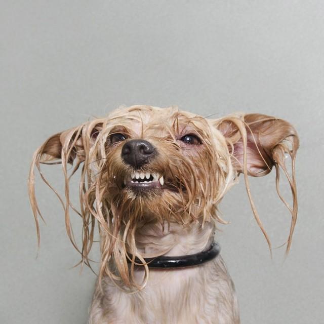 Собаки после купания