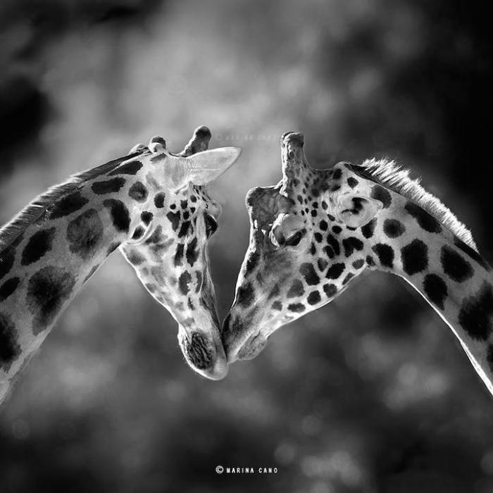 Дикие животные в фотографиях Марины Кано