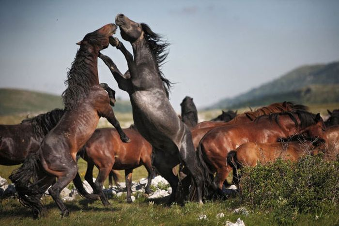 Превосходные фотографии дикой природы