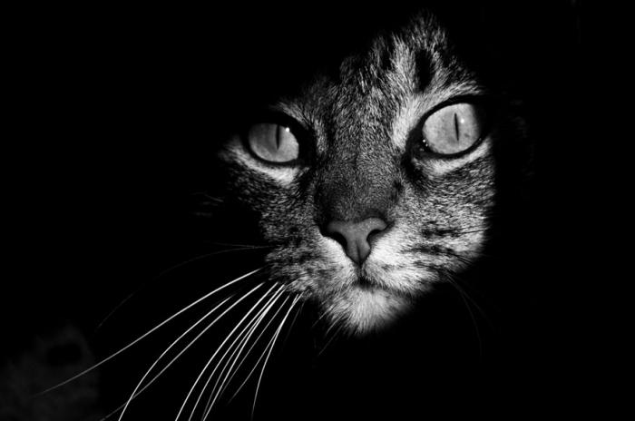 Черно белые фотографии кошек