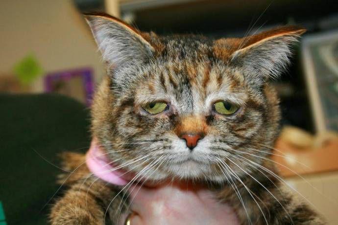 Самая печальная кошка нашла себе новых хозяев