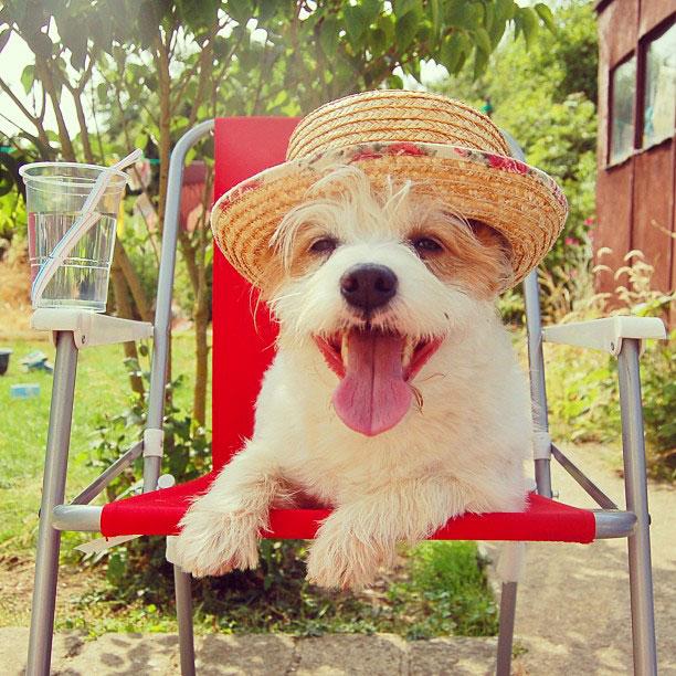 Про, картинки домашние животные смешные