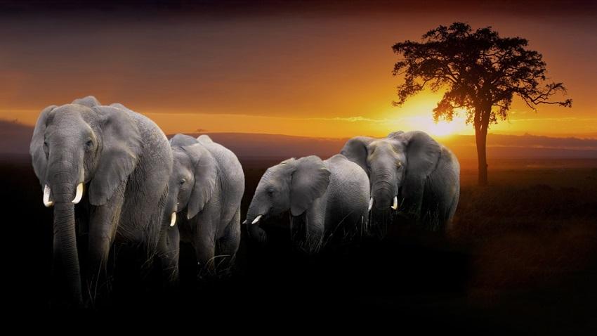 заставка на телефон слоны № 57316 бесплатно