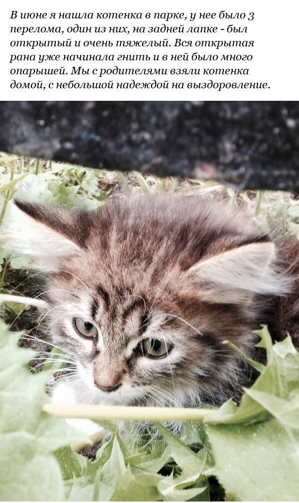 История спасения котенка