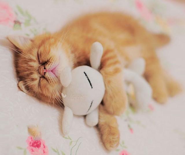 Спящие животные с игрушка