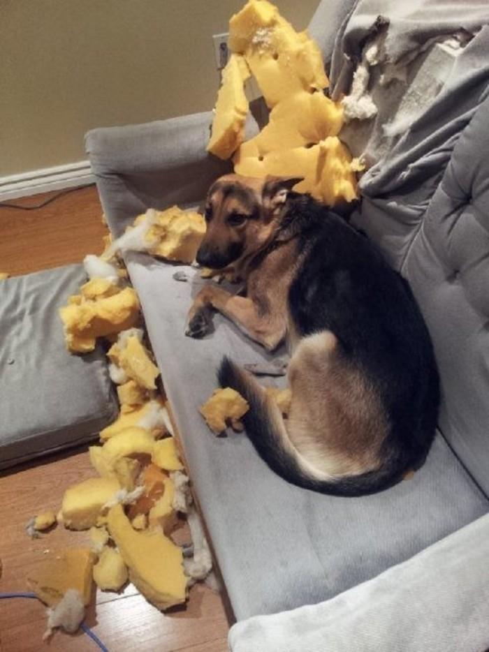 Когда собаки остаются одни дома
