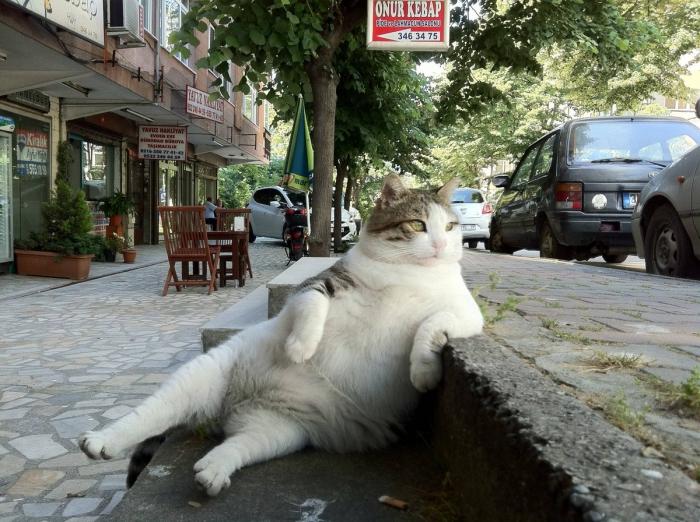 Правила жизни настоящего кота