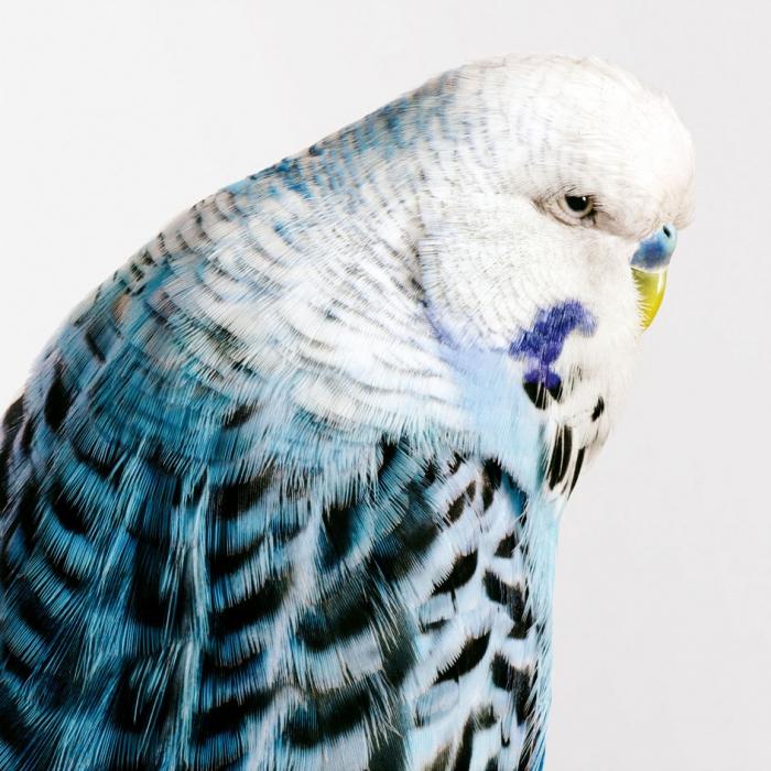 Птицы в фото Лейлы Джеффрис