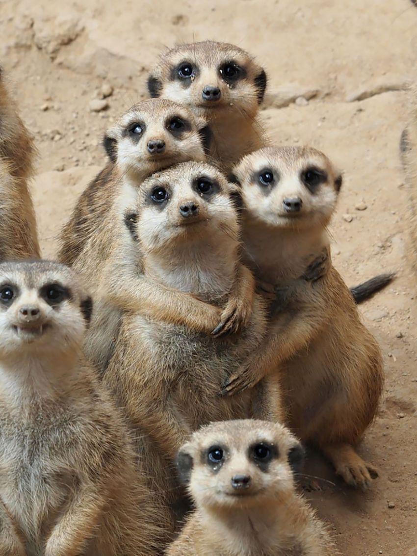 Свахе день, картинки много смешных животных