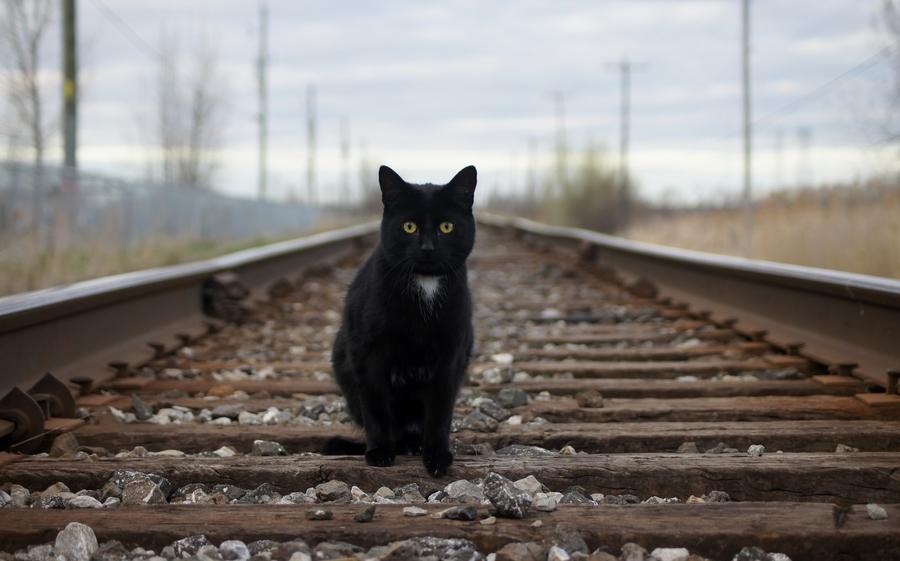 кошка по рельсам картинки существовании
