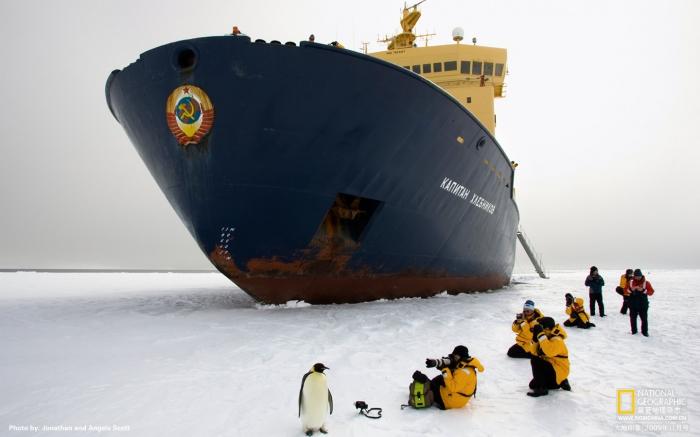 Почему пингвины не примерзают к льдине ?
