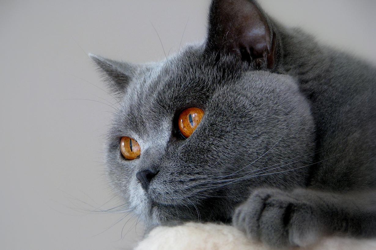 картинки котов самые красивые интересно знать