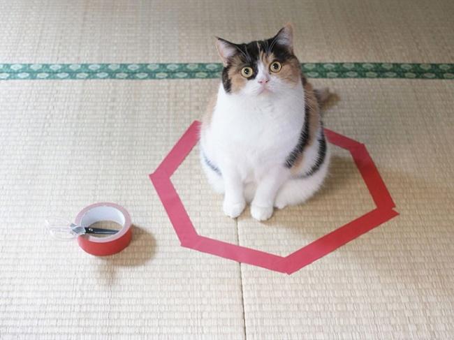 Простой способ обмануть своего кота