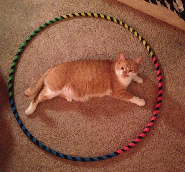 кошку ловят кругами