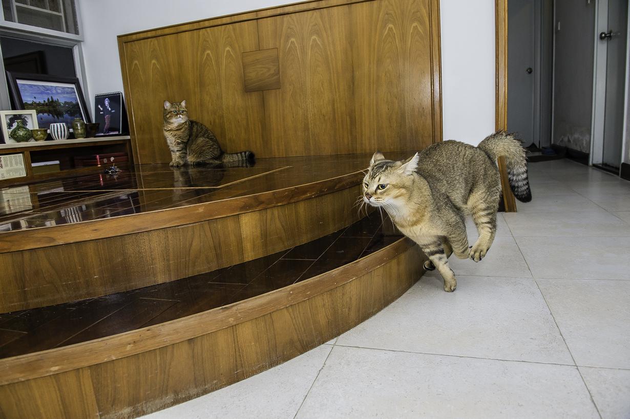побывали жизнь одной кошки в картинках этом никогда