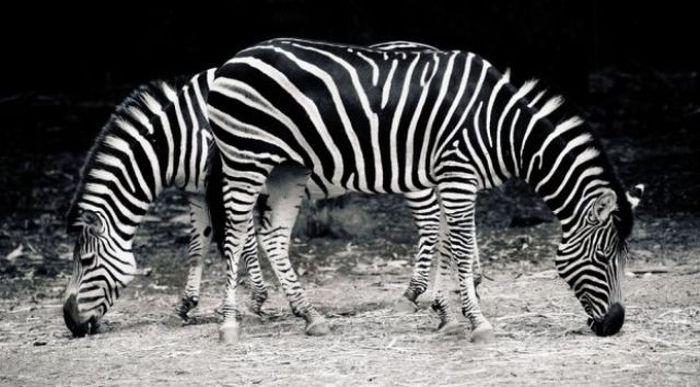 Иллюзии в фотографиях