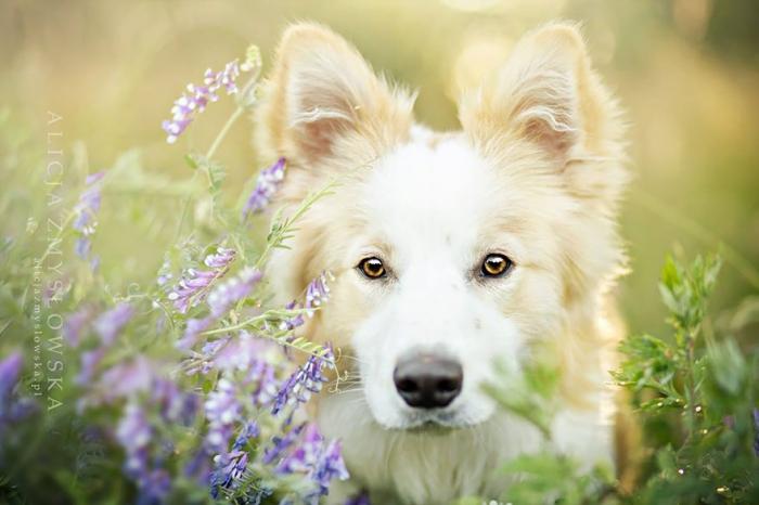 Фотографии собак от Алиции Змысловской