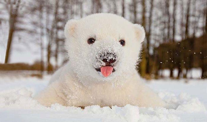 животные впервые увидели снег