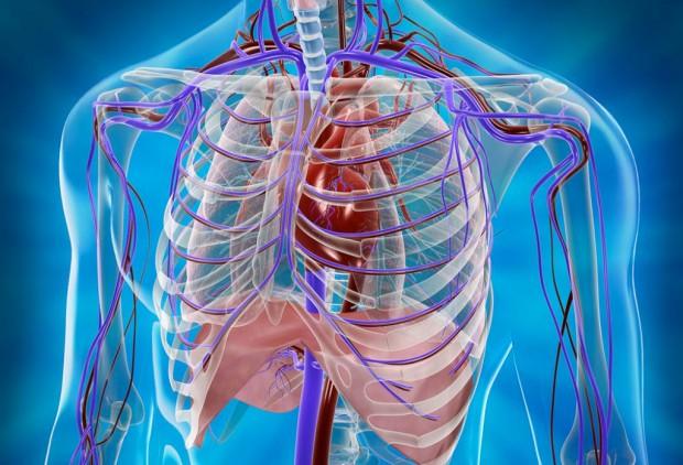Невероятные функции нашего организма