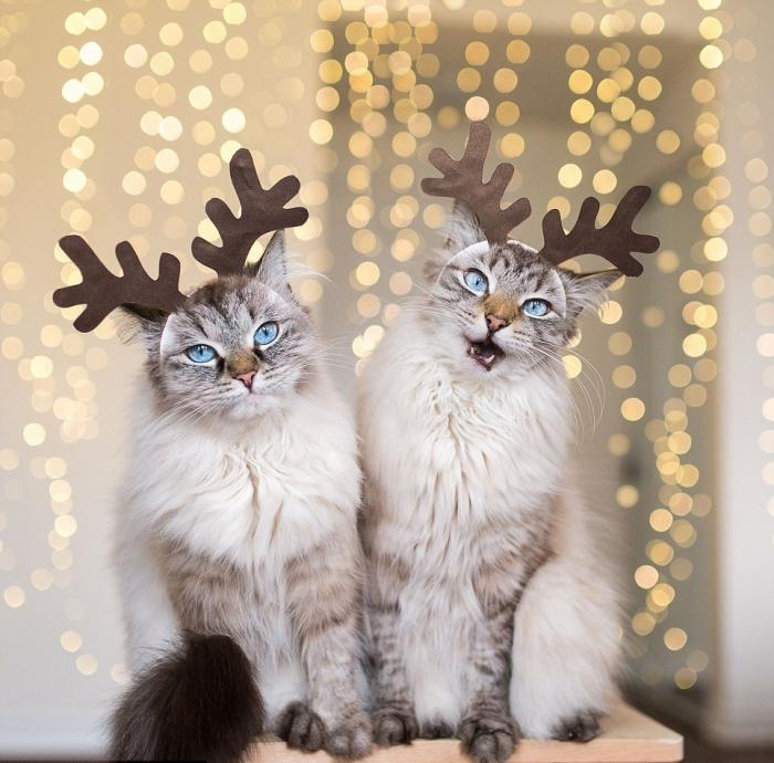 Кошки в забавных костюмах