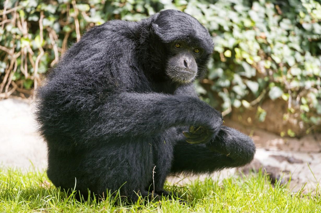 Смотреть картинки с смешными животными, мудрость зельды