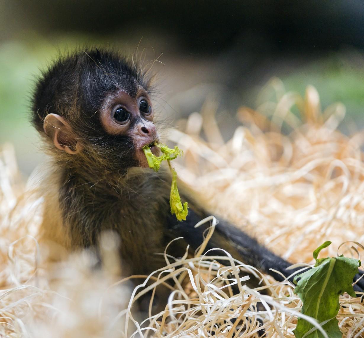 Картинки про обезьянок картинки