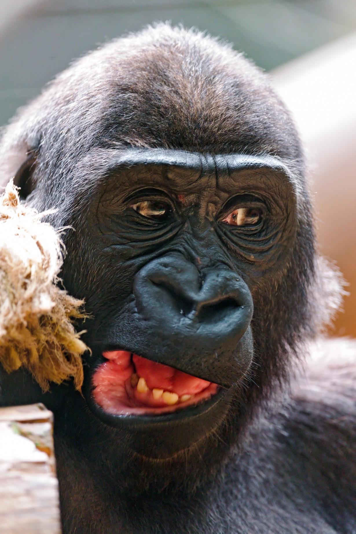 Яндекс картинки приколы животных