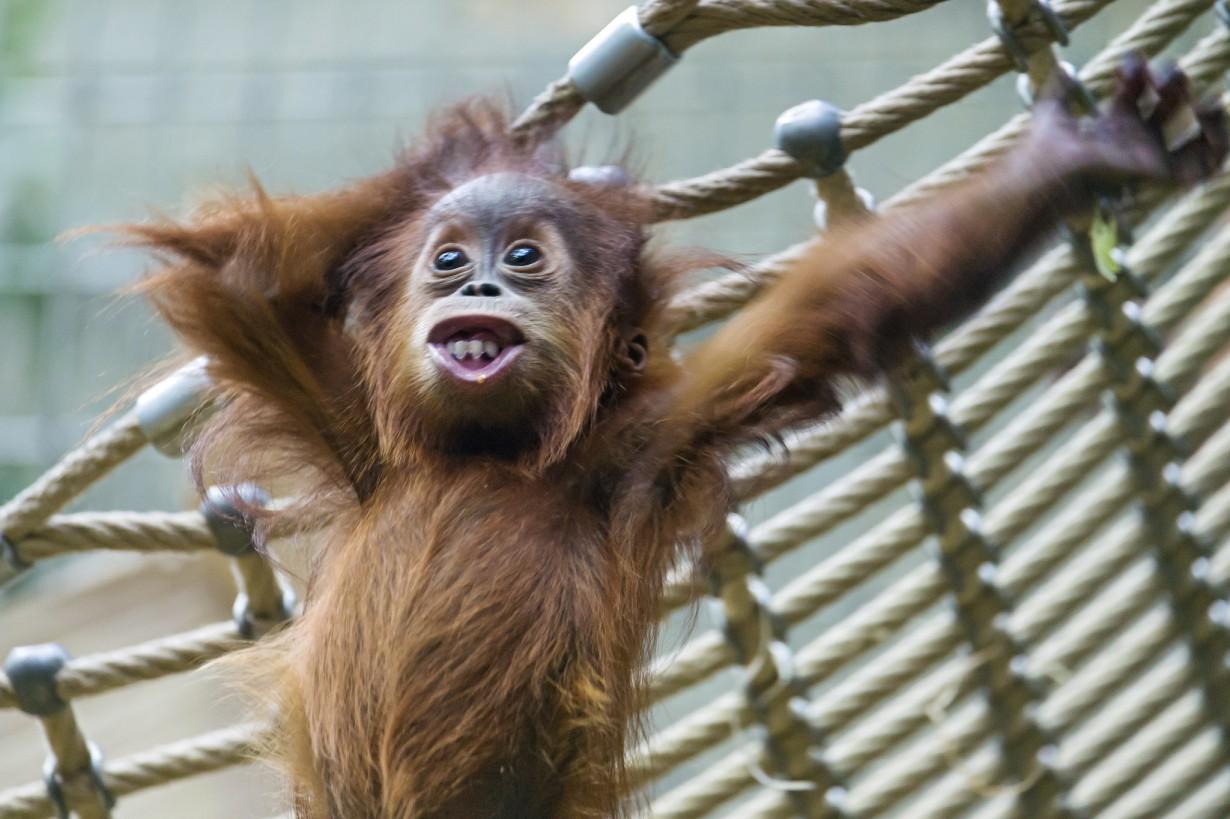 Прикольные картинки про работу с животными, днем рождения