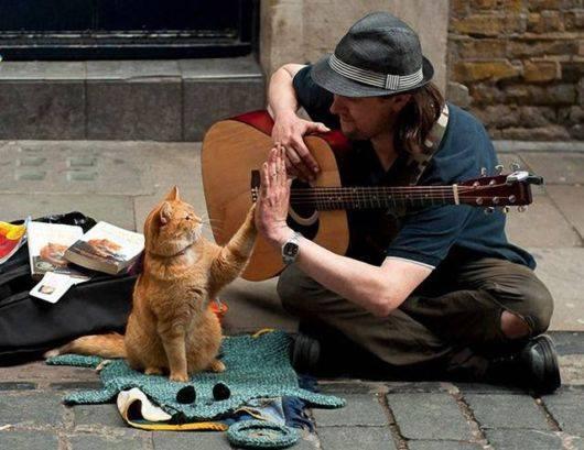 Кот изменил его жизнь в лучшую сторону