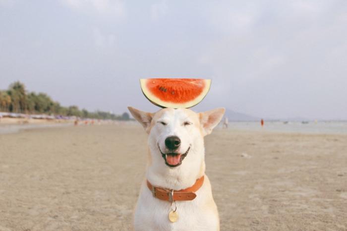 Собака победившая рак