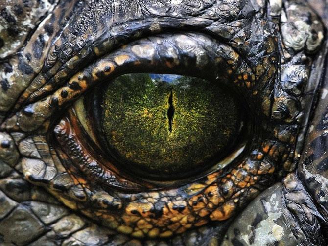 Версии исчезновения динозавров