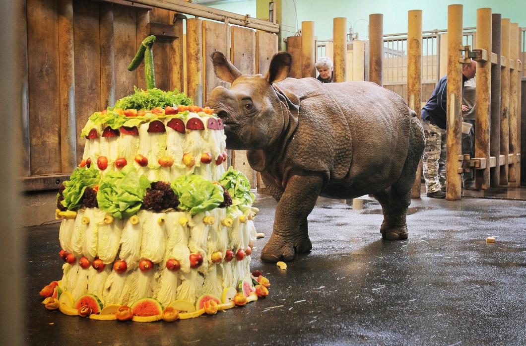 Картинки, прикольные картинки животных с днем рождением