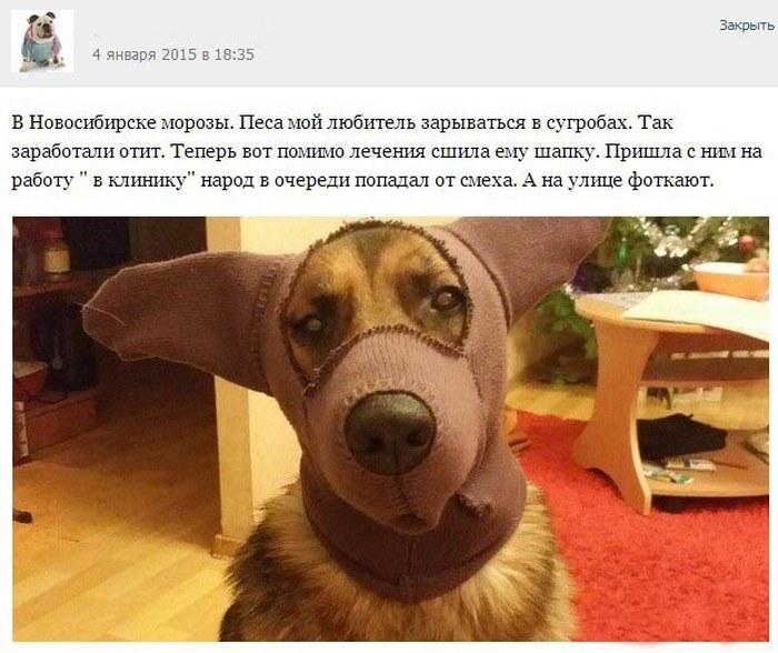 Истории от ветеринаров (часть 1)