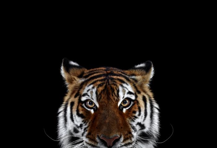 Фотографии диких животных от Брэда Уилсона