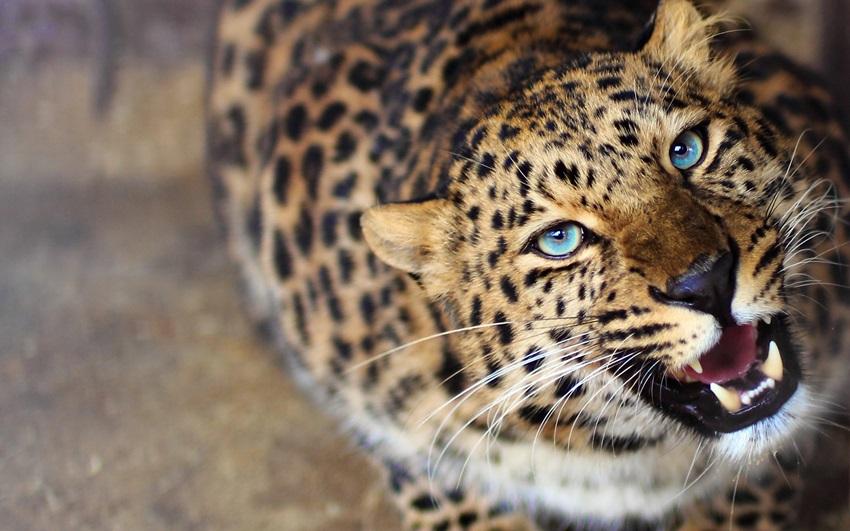 Фотографии с животными