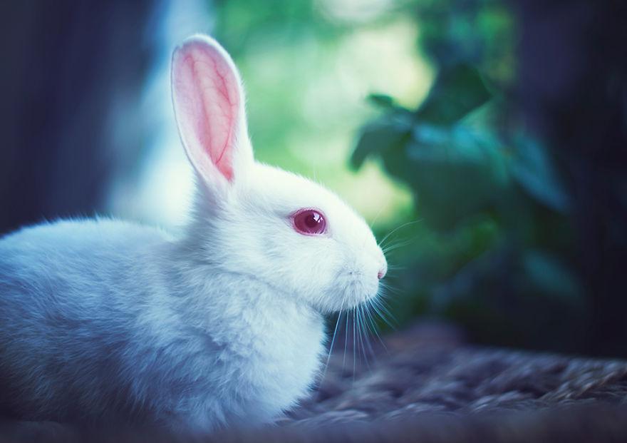 Милый кролик картинка
