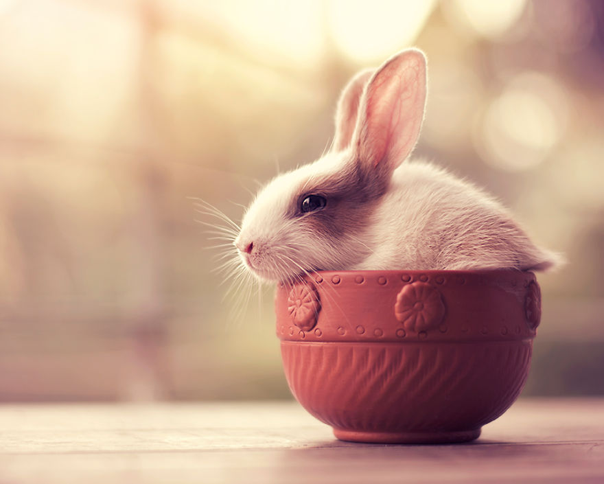 милый кролик картинка того