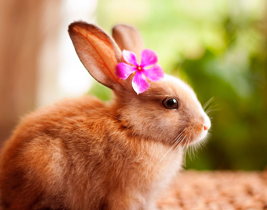 Милый кролик открытка