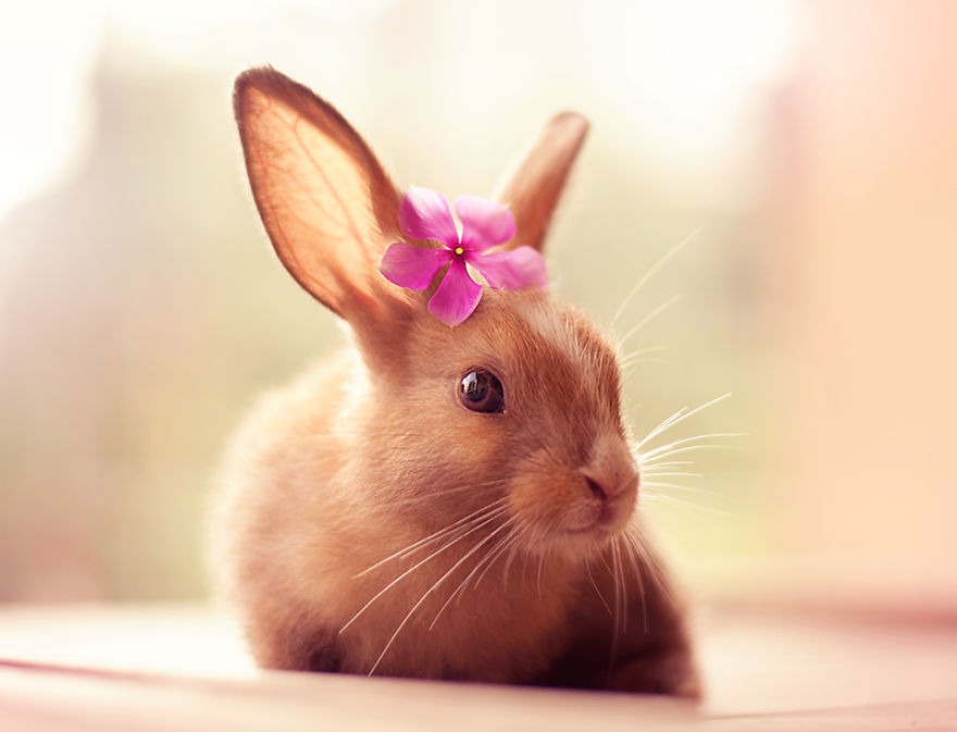 Картинки с милыми кроликами
