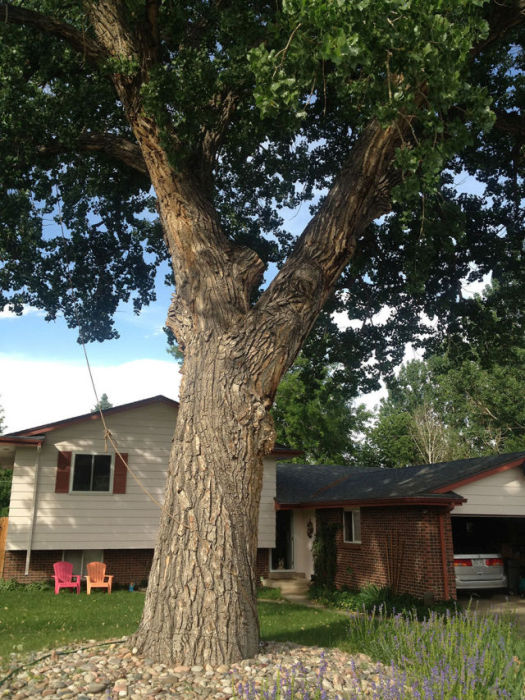 Детский домик на дереве