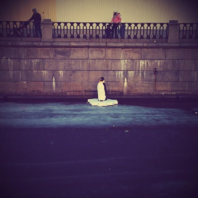 В канале Грибоедова появился пингвин