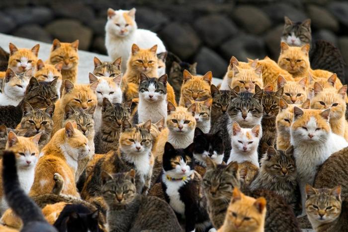 Остров кошек