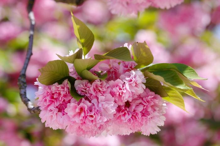Весенние цветущие деревья