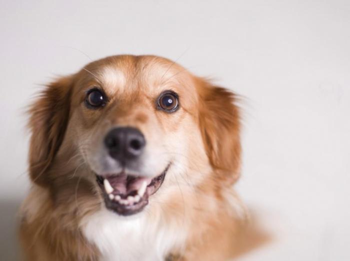 Факты о собаках–спасателях