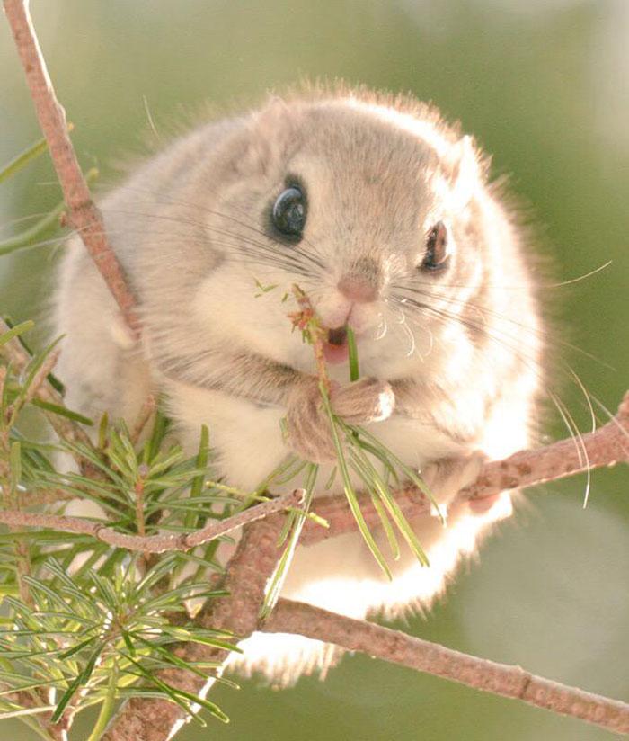милые животные с острова Хоккайдо