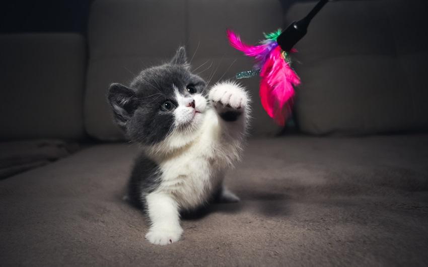 Картинки на заставку телефона котята