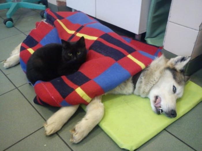 Кот санитар в приюте для животных
