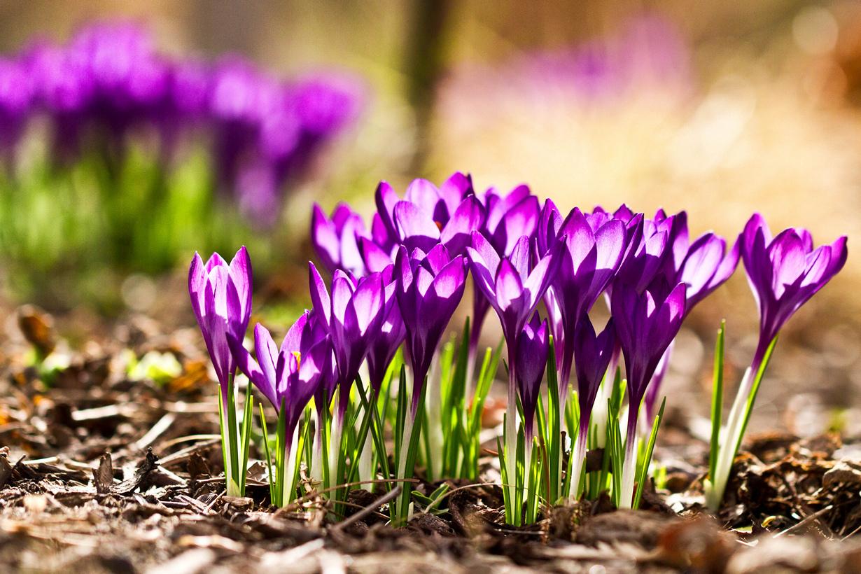 весна фото интересные после